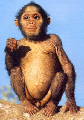 australopithecusafricanusj1