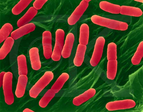 Eubacteria, now known as just bacteria