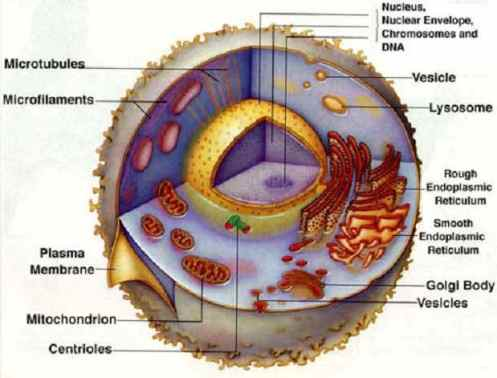 Eukaryote Structure
