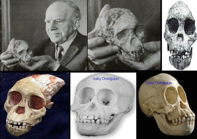 taung baby collage