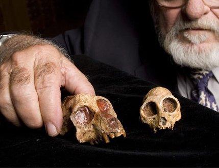 aegyptopithecus_skulls_02