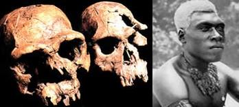 homo-erectus-malaysian