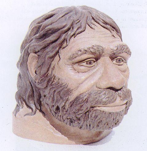 homo-erectus6