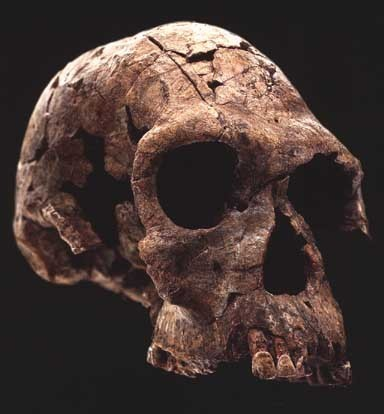 Homo Habilis Tools http://truthopia.wordpress.com/2009/03/01/i-science-h-origin-of-man-evolution-style-home-habilis/