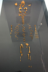 le-moustier skeleton