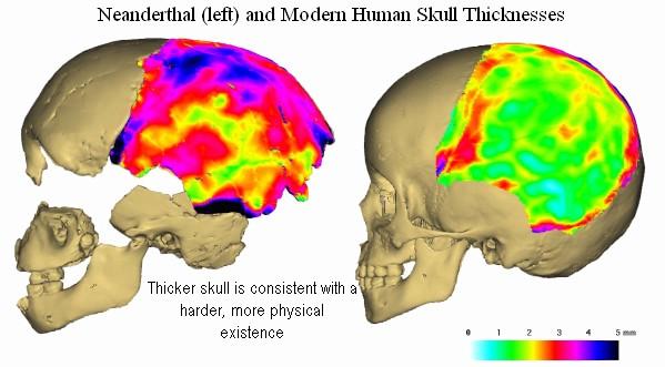 neanderthal-parietals