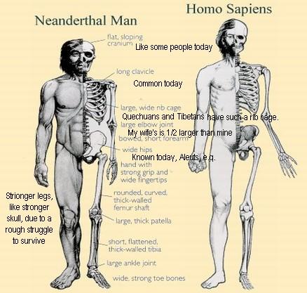 neanderthal1b