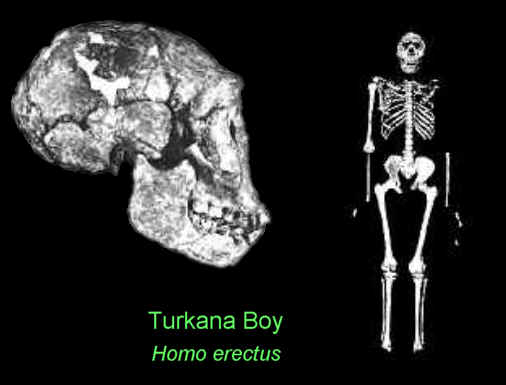 turkana-boy-he